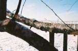 Birke 9 Winter Kodak Ektar
