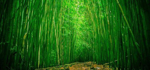 Что такое бамбук