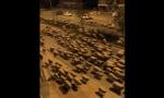 Rebaño de ovejas invade Samsun ciudad turca