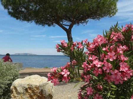 Von Marseillan zurück nach Méze