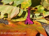 (c) Octobre Rose 2015