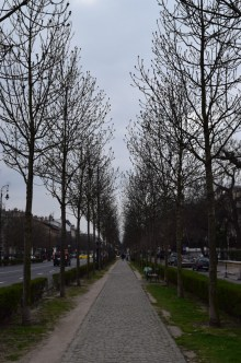 Beautiful trees lined the path to Heroes Square