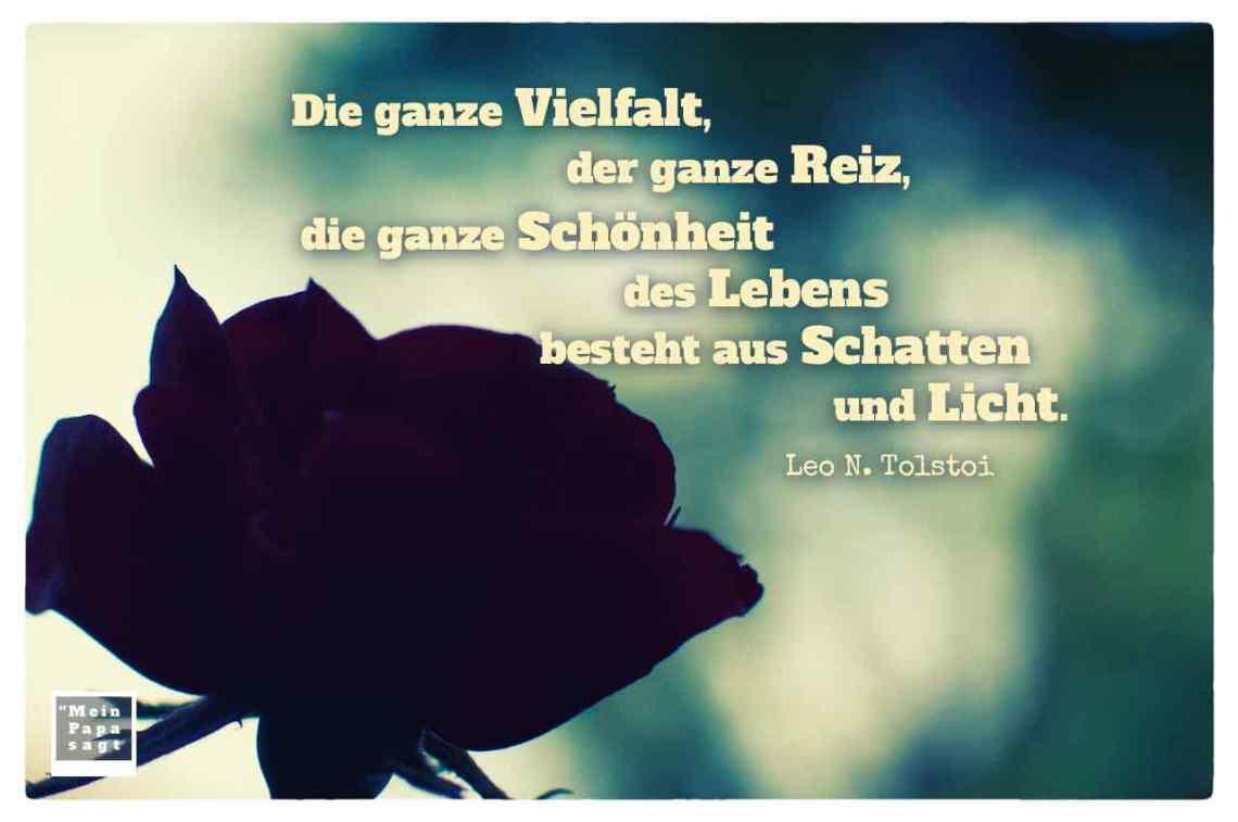Rote Rose Im Gegenlicht Mit Dem Tolstoi Zitat Ganze Vielfalt Der Ganze Reiz
