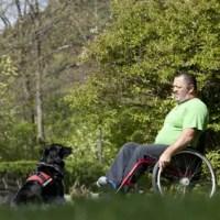 Als Rollstuhlfahrer einen Hund halten?