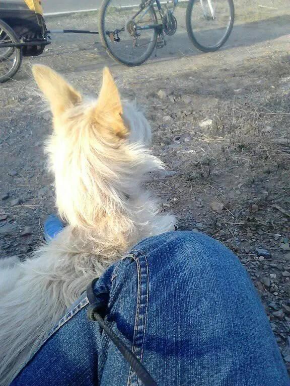 Gebrochen hund gips bein Schock für