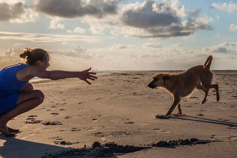 Erfahrungsbericht: Hund aus dem Auslandtierschutz