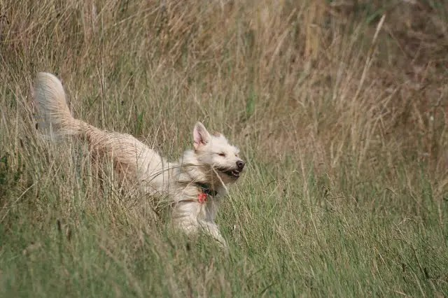 Angst vor Hunden – wieder mehr Lebensfreude nach Beißattacke und Co.