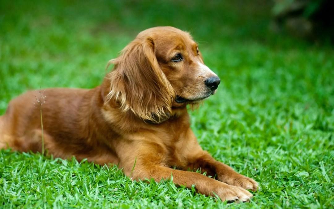 Arthrose beim Hund – was hilft wirklich?