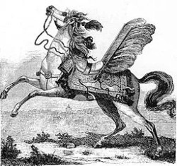 hussaria-pferd
