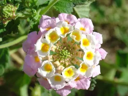 Resultado de imagem para flores maravilhosas do mundo