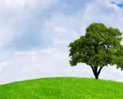 Tudo Sobre Meio Ambiente (1)