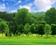 Tudo Sobre Meio Ambiente (15)