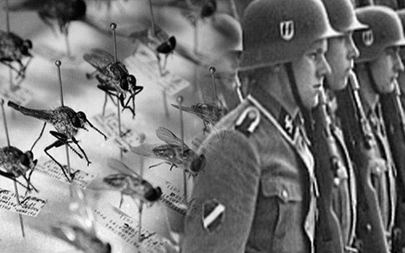 PEQUENOS E MORTAIS - INSETOS COMO ARMAS DE GUERRA