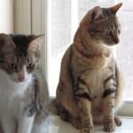 桃園市議員謝美英貓咪救援送養16