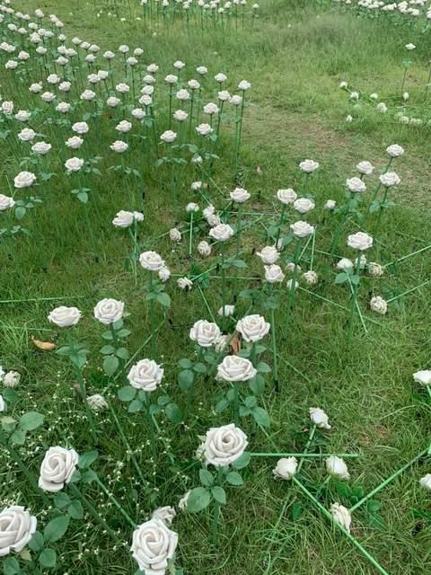 中壢區光明公園大地花毯秀燈會