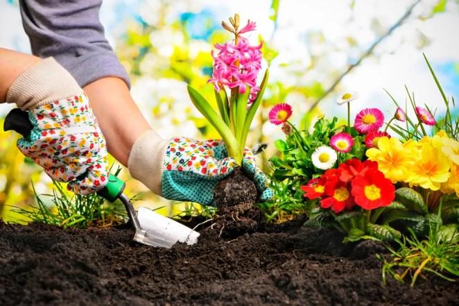 Resultado de imagen de cultivar plantas en jardin