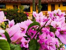 Las mejores zonas donde alojarse en San José, Costa Rica