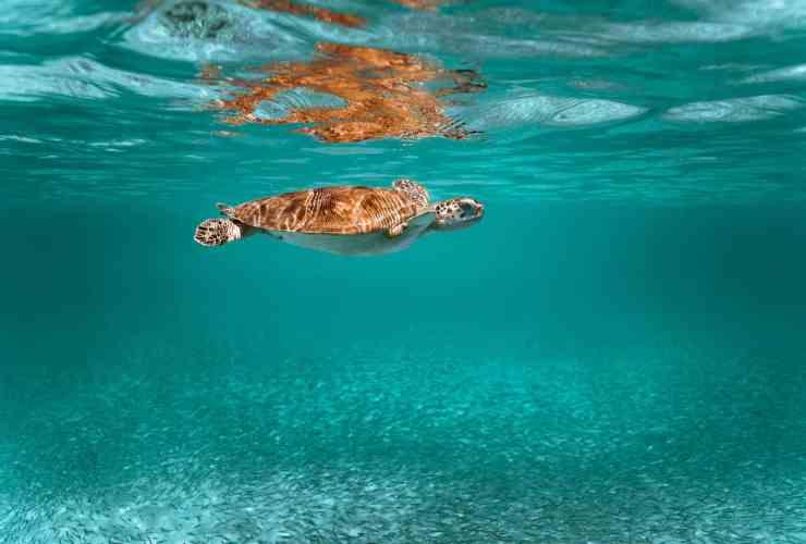 Las mejores zonas donde alojarse en Aruba, Antillas Holandesas