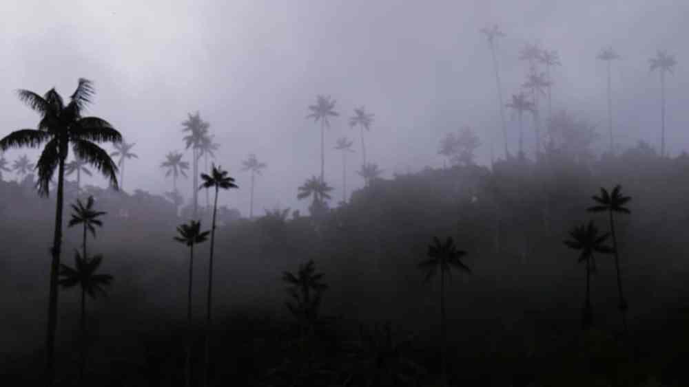 Dónde dormir cerca del Valle del Cocora