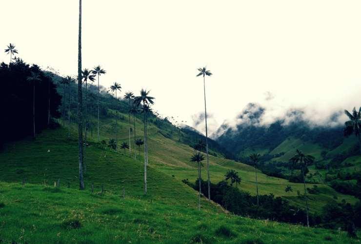 Las mejores zonas donde alojarse en Salento y el Valle del Cocora, Colombia