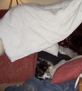 Den for a dog to feel safe