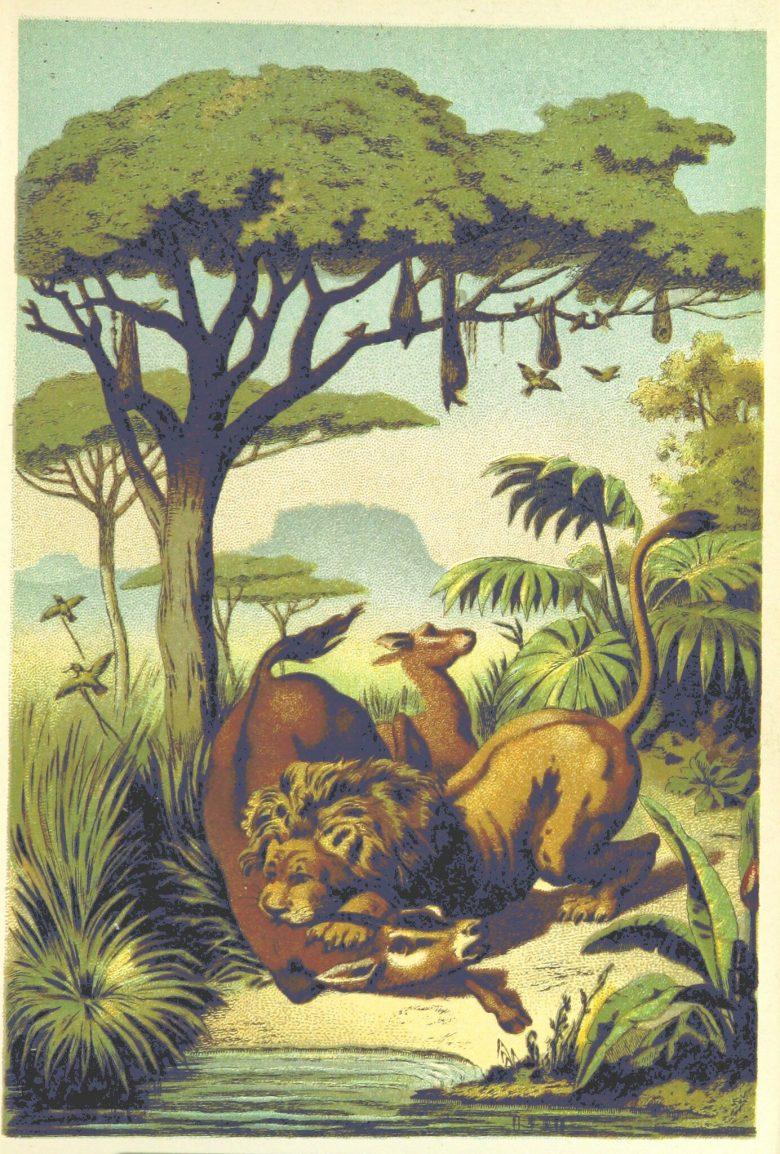 """Illustation einer """"afrikanischen Savanne"""" auf der ein Löwe ein Tier unter einem tischartigen Baum gerissen hat."""