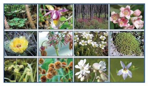2015 AB Wildflowers summary