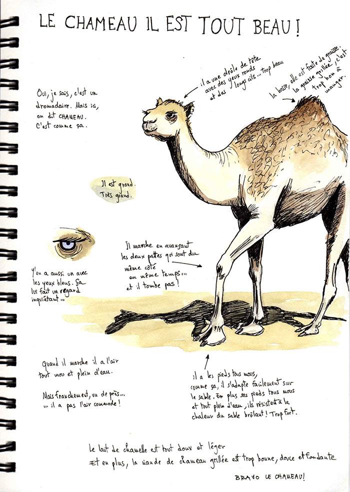 Mauritanie 2014 - Le chameau