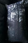 Still_forest