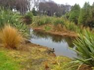 Thomsons bush