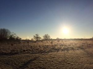 Sunny Winter Scene