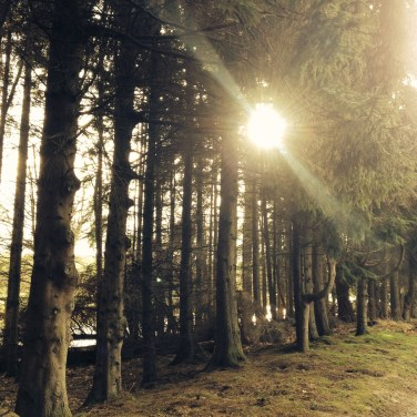 Sunshine spitting the trees