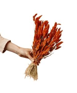 Burnt Orange Dried Lagurus - Terracota Color Bunny Tails / Wholesale Dried Flowers