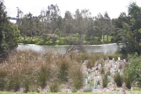 westgate-vegetation