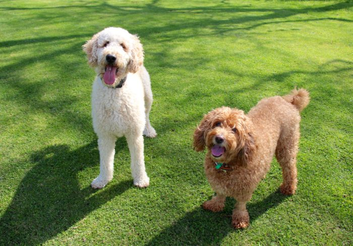 Homestay petsitting for dogs in Melbourne via Pawshake