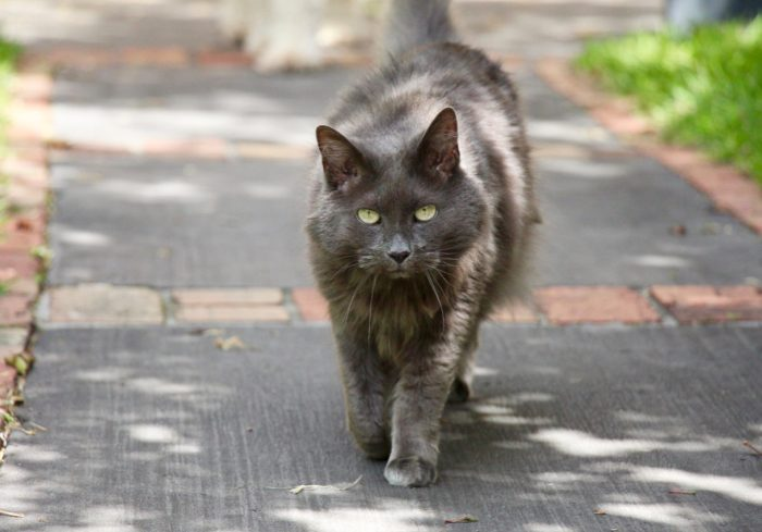 Homestay petsitting for cats in Melbourne via Pawshake