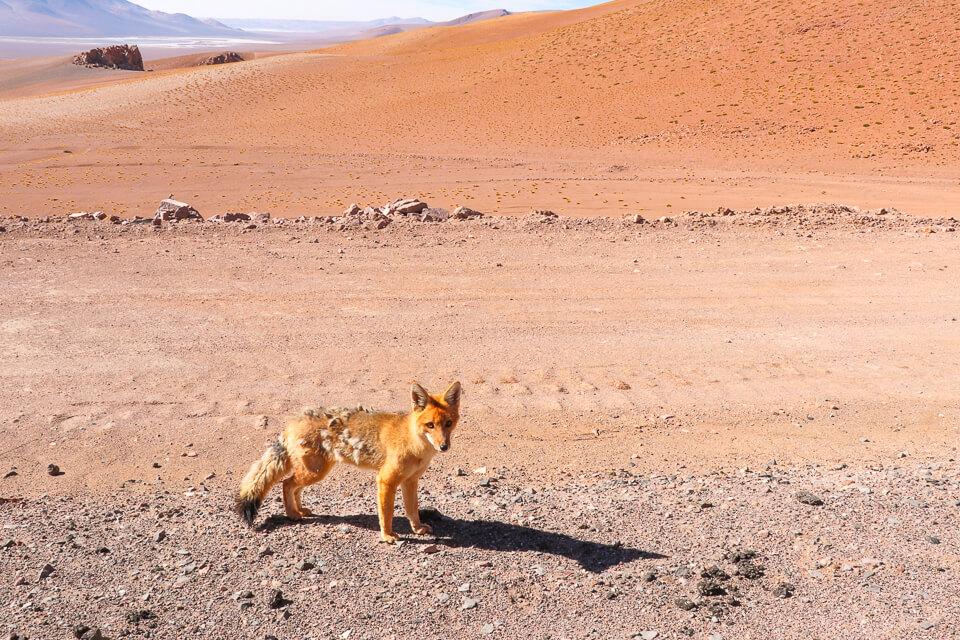 Como é o passeio no salar de tara no deserto do Atacama