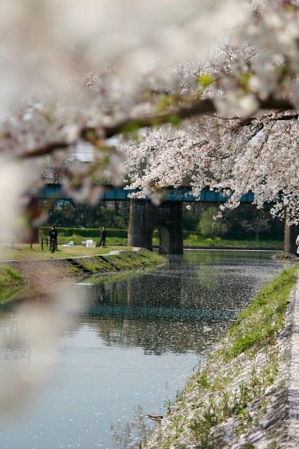 Melhor época para visitar o Japão