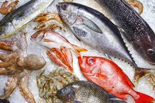 peixes Como identificar um peixe em mau estado?