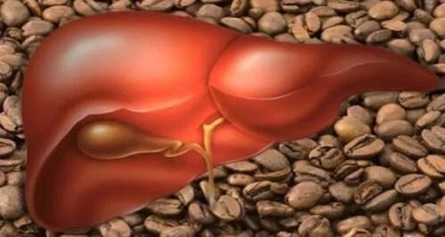 O que três xícaras de café por dia podem fazer pelo seu fígado