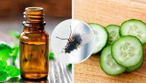 7 repelentes naturais para moscas