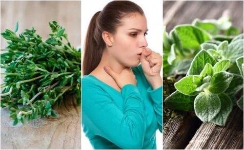 Como aliviar a tosse com catarro usando 5 plantas medicinais