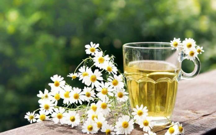 Chá com flores de camomila