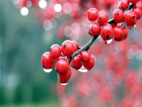 Fruto para fazer bebidas isotônicas