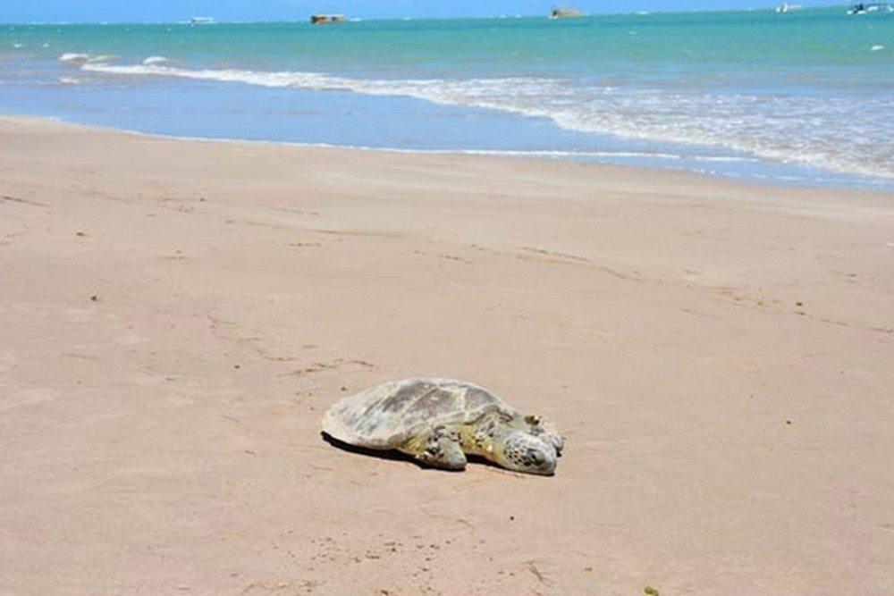 Praia De Camboinha - Cabedelo