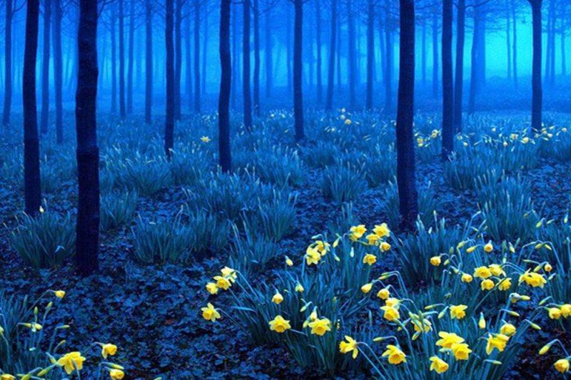 Floresta Negra - Alemanha