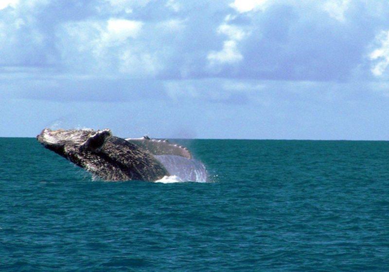 Observação de aves e baleias