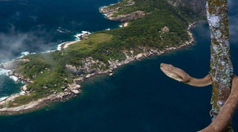 Ilha Da Queimada - SP