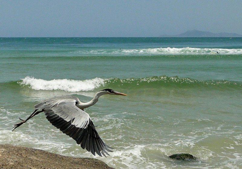 Guarda Do Embaú Oferece Trilhas E Surf Em Cenário Paradisíaco