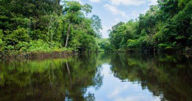 Floresta Amazônica - Um lugar para visitar ao menos uma vez